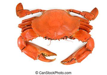 bleu, cuit, crabe