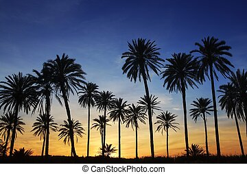bleu, doré, ciel, arbres, paume, coucher soleil, rétroéclairage