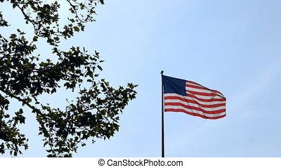 bleu, etats, uni, angle, ciel, arbre, onduler, arrière-plan., drapeau, vert, bas, amérique, vent, vue