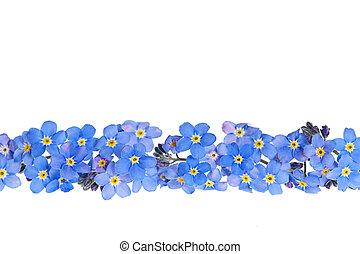 bleu, fleur source, frontière