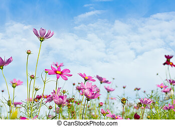 bleu fleurit, ciel, pâquerette