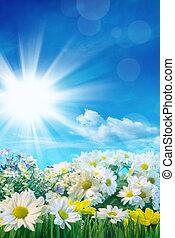 bleu, fleurs ressort, ciel