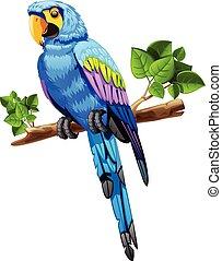bleu, grand, branche, perroquet
