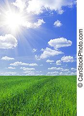 bleu, herbe champ, ciel