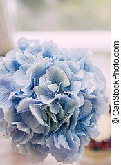 bleu, hydrangeas, bourgeon
