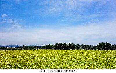 bleu, jardin, ciel, fond jaune, fleurs
