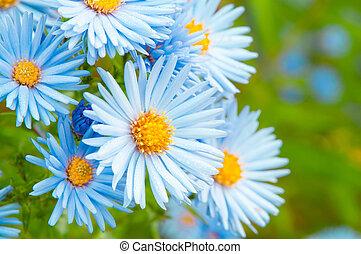 bleu, jardin, printemps, gropu, pâquerette, fleurs