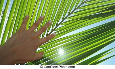 bleu, lentille, lent, feuille, soleil, ciel clair, main émouvante, exotique, arrière-plan., clair, femme, paume, effets, femme, flamme, sun., apprécier, mouvement