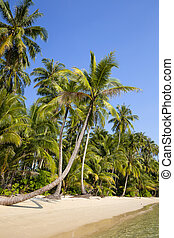 bleu, noix coco, ciel, arbre, exotique, paume, mer, thaïlande, plage