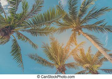 bleu, noix coco, ciel, clair, arbre, fond