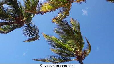 bleu, paume, ciel, arbres, contre
