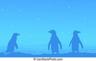 bleu, paysage, silhouette, fond, manchots