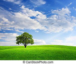 bleu, printemps, arbre chêne, paysage, ciel