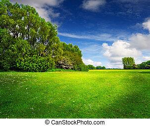 bleu, printemps, ciel, champ vert