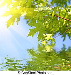 bleu, printemps, feuilles, ciel, contre, vert
