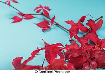 bleu, rouges, automne, fond, space., lierre, feuilles, gratuite