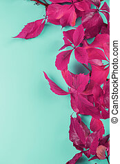 bleu, rouges, automne, space., lierre, fond, gratuite, feuilles