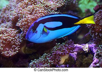 bleu, saveur forte, fish
