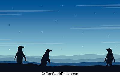 bleu, silhouette, fond, manchots