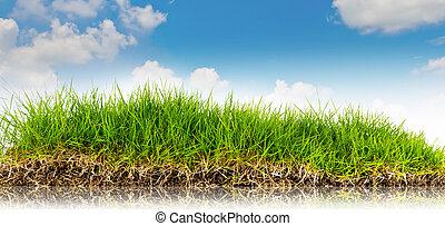 bleu, .summer, nature, printemps, ciel, dos, fond, temps, herbe