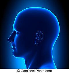 bleu, tête, -, anatomie, vue, côté, duper