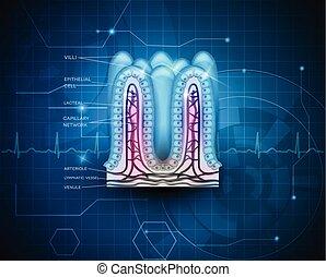 bleu, technologie, intestinal, fond, villi