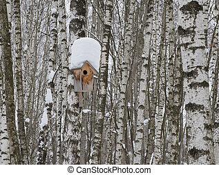 boîte, bois, coffre, arbre, nesting, bouleau