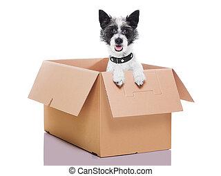 boîte, chien, en mouvement