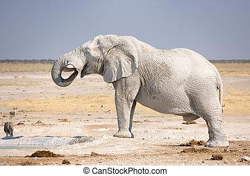 boire, africaine, waterhole., éléphant