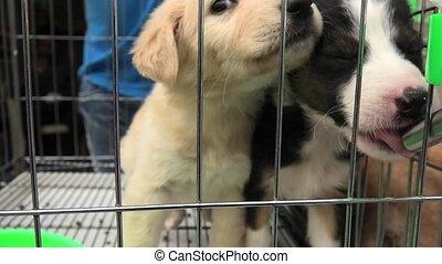 boire, chiot, cage, chiens