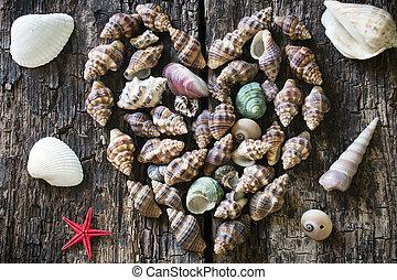 bois, coeur, fond, etoile mer, seashells