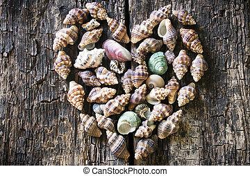 bois, coeur, fond, seashells