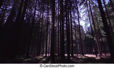 bois, grand, rayons, arbres, soleil