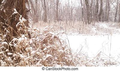 bois, hiver