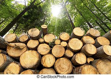 bois, journaux bord, fond, forêt