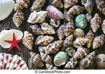 bois, seashells, lot, fond
