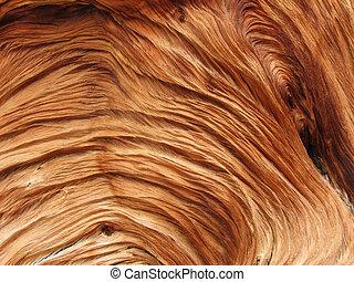 bois, tourbillonné, texture