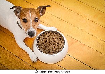 bol, chien, affamé