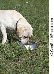 bol, mignon, yard., dehors, chien, nourriture mangeant