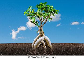 bonsai, bleu, arbre, ciel, croissance, soutenable, concept:
