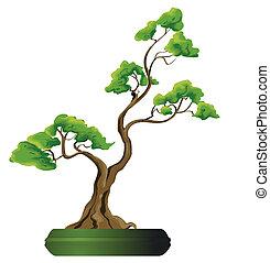 bonsai, vecteur, arbre, illustration
