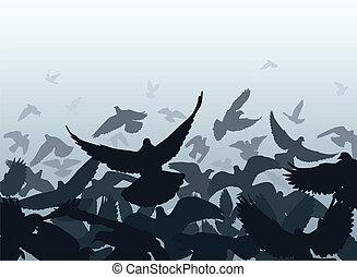 bord, pigeon