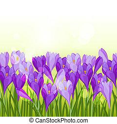 border., printemps, seamless, colchique, modèle, horizontal, fleurs