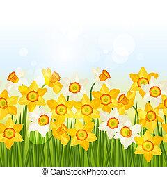 border., printemps, seamless, modèle, narcisse, horizontal, fleurs