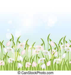 border., printemps, seamless, modèle, perce-neige, horizontal, fleurs