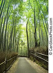 bosquet, bambou