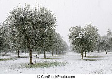bosquet, olive