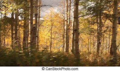 bosquet, par, tremble, conduite, automne