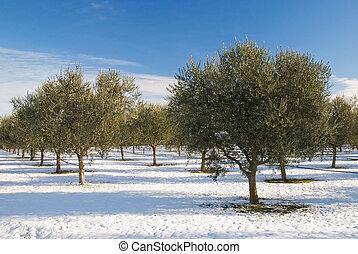 bosquet vert olive, hiver