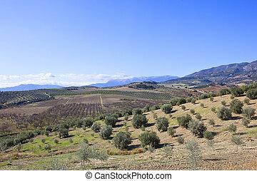 bosquet vert olive, paysage